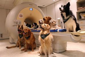Медицина и собаки