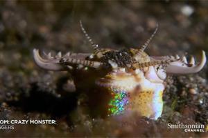 Подводного червя-убийцу показали на видео