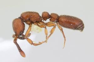 В США создали генетически модифицированных муравьев-социопатов