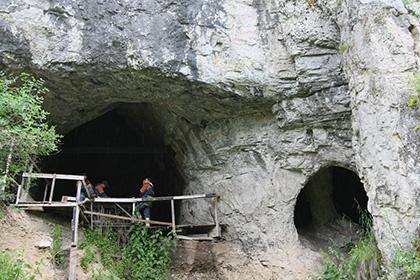 В Денисовой пещере нашли древний гибрид зебры и осла
