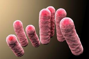Раскрыт механизм эволюции смертельно опасных бактерий